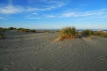 Sand dunes at Southshore Spit